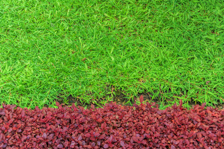 red grass: Green and red grass background Stock Photo