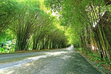 thickets: The streets are filled with bamboo sides