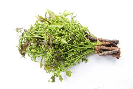 neem: Neem plant