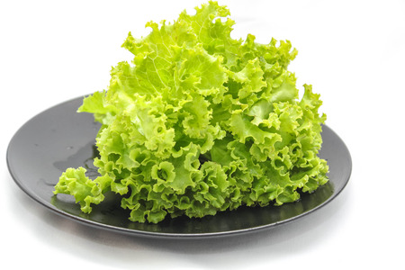 Green oak leaf lettuce photo