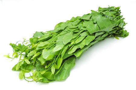 produce energy: Pak-wan Tree Stock Photo