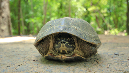 coldblooded: turtle
