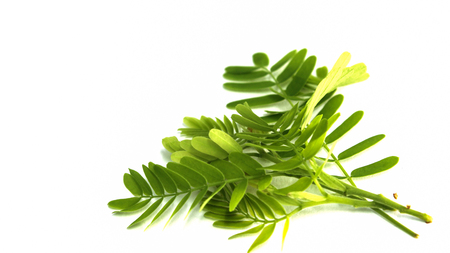 Tamarind leaves Stock Photo