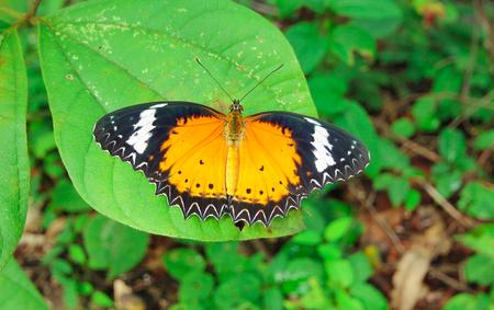 tropical garden: Butterfly. Butterfly on flower. Butterfly in tropical garden. Butterfly in nature