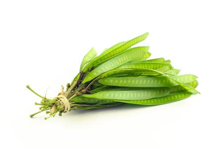 tamarindo: Semilla Verde Blanco Popinac, árbol de plomo o Wild Tamarind aislados sobre fondo blanco Foto de archivo