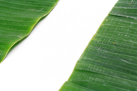 original ecological: white background surrounded by green banana leaves with text space