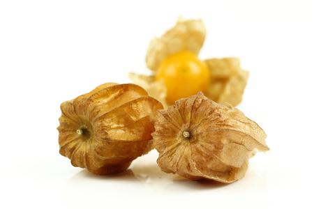 nightshade: Fresh golden cape gooseberry, physalis