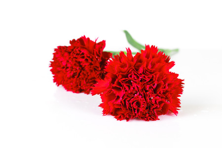 beautiful red carnation flower isolated on white background Stock Photo