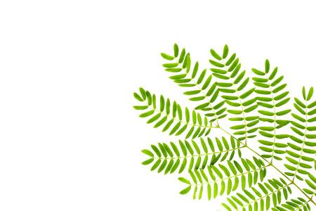 fresh green grass leaves on white background