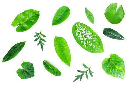 different tropical green leaves on white background Stock Photo