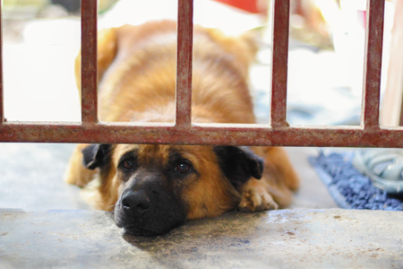 Sad dog looking out through the wires of his cage Stok Fotoğraf