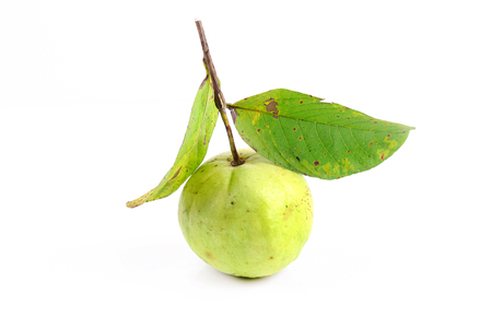 Green guava fruit with leaves on white background Stok Fotoğraf