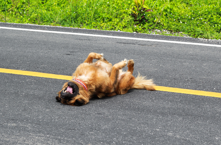 A brown dog exercise on the street in the morning