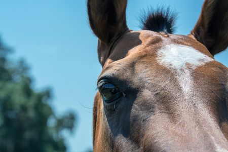 Close up of the right eye of a young horse