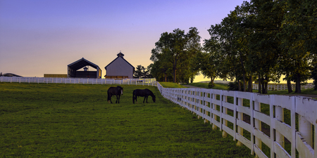 Two horses in a pasture at sunrise Banco de Imagens
