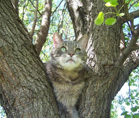 Gray Cat In Tree Stock Photo