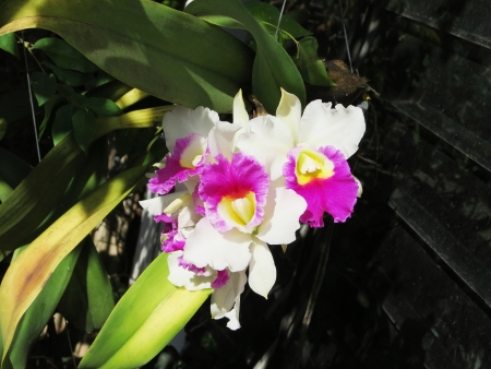 exquisiteness: Beautiful flowers  Stock Photo