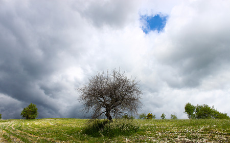 spectral colour: Tree standing alone in a cloudy sky at spring