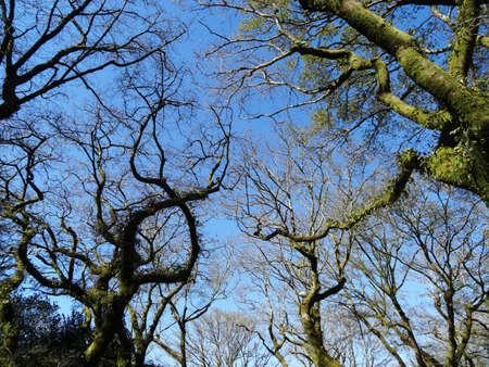 compostela: Alameda garden landcape - Santiago Compostela - Spain