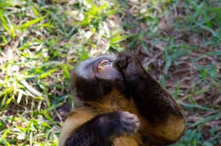 devouring: Monkey devouring