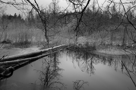 sweden winter: Swedish winter nature and landscape in black and white. Cold cloudy day with snow and ice. Beautiful outdoors and lake. Calm and peaceful monochrome picture from the nice woods. Stock Photo