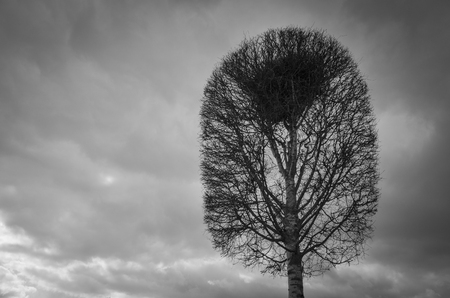 poetic: Single tree and bird nest at top of branches. Beautiful black and white fine art photo. Daytime with cloudy sky. Nice, calm and peaceful monochrome image. Stock Photo