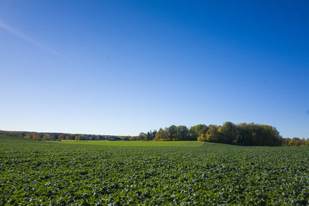 Beautiful autumn day in Sweden Scandinavia. Sun, fields and blue sky. Calm, peaceful and happy image.