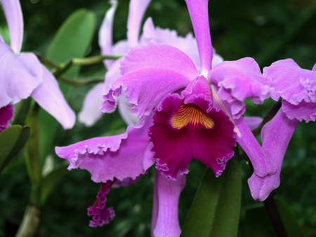 lockdown: Close-up pink Orchid flowers. Stock Photo