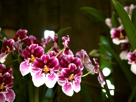 pink orchids at botanical garden Stock Photo