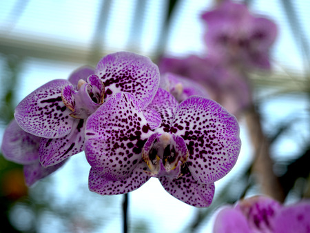 Beautiful blooming orchid on a blurred background