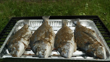 gilthead: Sea bream marinated in front of the grill. Stock Photo