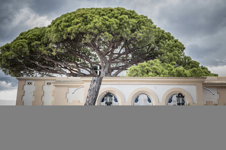 EL VENDRELL,SPAIN-MAY 30,2016: Big pine tree in front residential building, Vila Buenaventura, maritime promenade of Coma-ruga, El Vendrell, province Tarragona, Catalonia. Imagens - 72821264