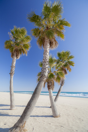 Palm tree in beach.