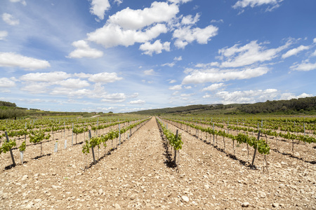 Landscape with vineyards in Penedes wine area, Catalonia, Spain. Stock Photo