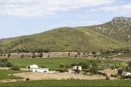 Lanscape with vineyards,Penedes wine cava region,Vilafranca del Penedes,Catalonia,Spain. Stock Photo