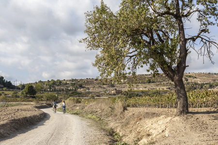 Landscape with vineyards in Penedes,catalan wine area,Vilafranca del Penedes,Catalonia,Spain.