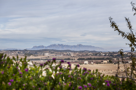 Landscape in Penedes area with Montserrat mountain at background, Catalonia,Spain. Stock Photo