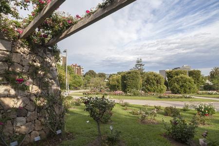 Garden of Cervantes, Rose garden in Les Corts district of Barcelona,Spain.