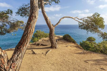 Typical mediterranean landscape with pines and sea in Lloret de Mar, Costa Brava, Catalonia, Spain.