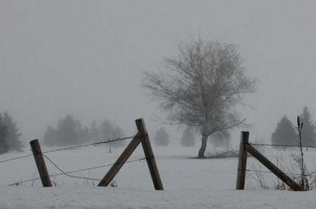 Fence and Tree Locked in Winter Fog