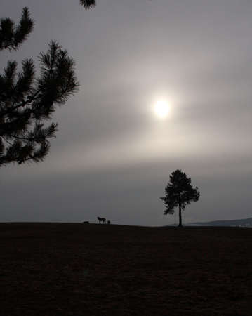 Horse on Foggy Hilltop