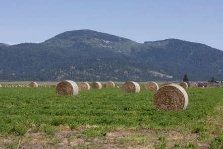 Bales of Hay Stock Photo - 21543370