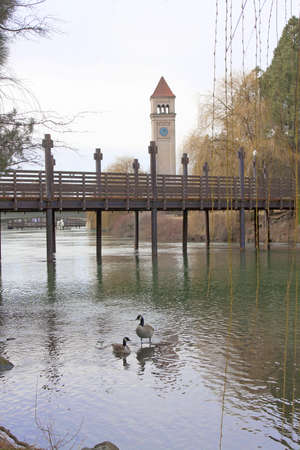 Clock Tower in Fall with Canada Geese