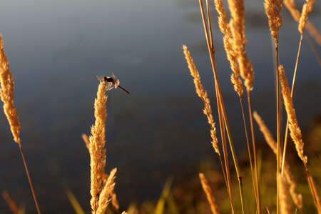Dragonfly on Sunlit Grass Stock Photo