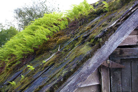 Roof with Ferns and Moss Stock Photo - 22010820