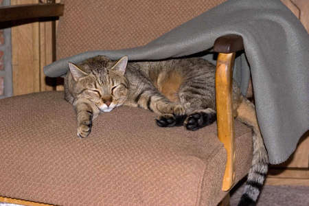 Cat under blanket Stock Photo