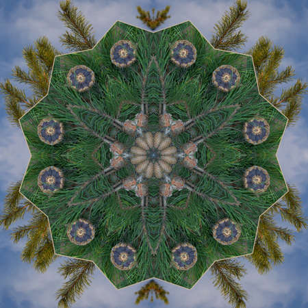 Cone and Greenery Kaleidoscope