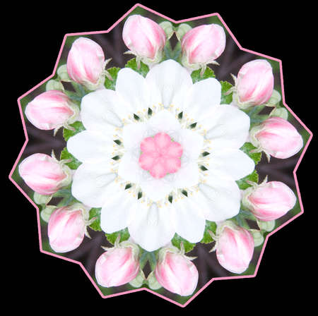 Apple Blossom Kaleidoscope