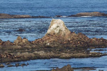 Seals, Sea Lions on Simpson Reef Stock Photo