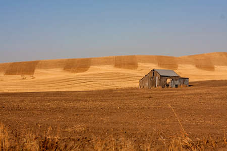 Abandoned Building in Wheat Field